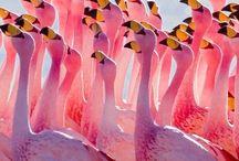 Birds / Birds