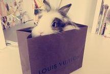 I LOVE Bunnies ♥ / by Mooi Photography