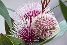 Australian natives & garden design ideas / by Amy A