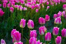 Pretty Flowers / Pretty Flowers
