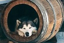 WINE-dog / All the beloved dogs of the wine world
