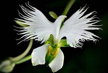 Flowers / Rare and beautiful flowers. Tips and ideas for growing flowers.