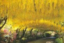 Les Jardins® sélectionne pour vous les plus beaux jardins du monde