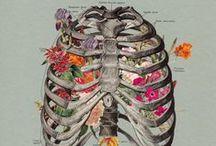 based on anatomy