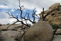 Photography - Desert