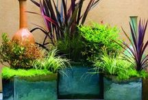 Gardening & Outdoor Living / by Bobbi M
