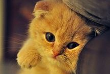 * Cute * / cat and adorable animals, chat mignon et animaux