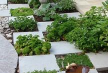 Herb and Veg Gardens