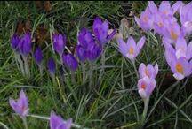 Lente inspiratie Marie-Fleurie Bloemenatelier / De natuur als inspiratiebron voor bloemsierkunst
