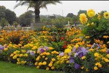 Jardin du Luxembourg Marie-Fleurie Bloemenatelier / Parijs