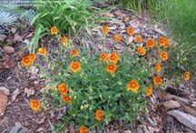 Lind Garden Additions