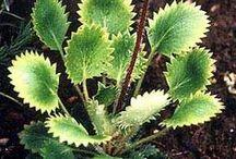 "Joy & Scott's Garden / ""lush"", colorful, super low maintenance, long blooming, wild/natural, reliable, practical, drought tolerant"