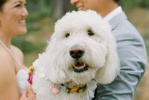 Wedding Paw-Ty (pets in your wedding)