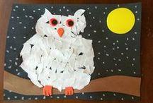 Themes & Schemes: Nocturnal Animals