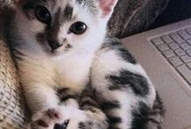 cat lovers / beautful cats