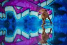 Pet Photography ideas / Inspire my photography & beautiful art! <3