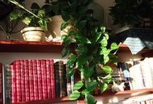 Garden INDOORS3~HOUSEPLANTS  as decor  / by Sandy SKDCP