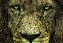 lions magic