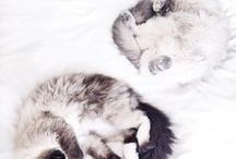 Cuteness overdose