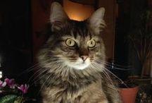 *Chats *Cats * Photos* / *En couverture, Rockwell, petit chat très intelligent de ma fille Mélanie;
