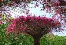 *C'est un Jardin extraordinaire * Amazing Garden*