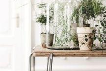 Indoor / Landscaping indoor