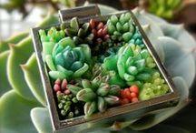 Miniature Gardens and Terrariums