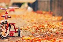 When leaves fall / #Autumn.