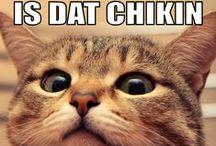 World of cats / Funny cat memes