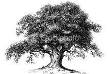 Trees / Tree sketches, tattoos, etchings, etc