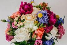 Flora Everywhere / - Color Schemes - Seasonal Guides -