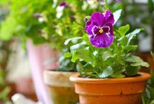 Flowers / flower,color