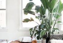 Apartment / Personalised Spaces & Decor