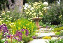 Ineffable Beauty / Garden: flowers, DIY