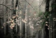 Collection automne/hiver intemporelle