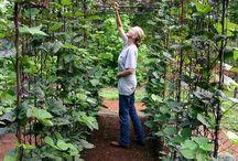 GARDEN  |  Veggie garden ideas
