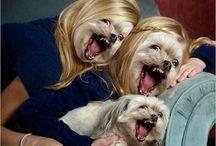 Humor / Laughs. Laughs everywhere  / by Eva Ackerman