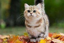 Cutest kitties