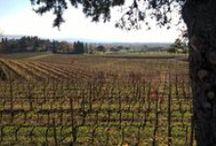 My vineyards, my Wines, my true passions .. / www.pighin.com