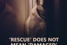 Im a #Dog Lover! / Dog quotes, dog gallery, dog, pit bull,