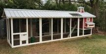 Carolina Coops  - Custom Chicken Coops / Our most popular coop!  We can customize the size of this coop based on the size of your flock and your property.  https://www.carolinacoops.com/shop/carolina-coop