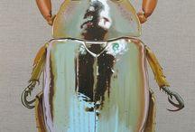 Insectenarchief