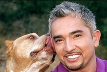 Pets & pet care /Pet Food & treats / by Josie Cruz