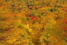 Autumn / by Theresa Aikin