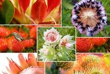 Beautiful Flowers / by Theresa Aikin