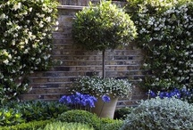 Topiary love / by Radford