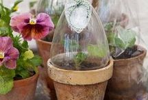Container gardening / by Cheryl