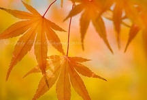 Autumn Splendour / by Cheryl