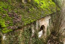 Moss, Lichen and Ivey covered / Thanks for following. Please pin just 10 pins at a time. Thanks.  / by Cheryl