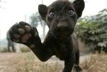 Animals - adorable - fierce  / by Jamie Cheatham Kral